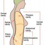 Body Cavity